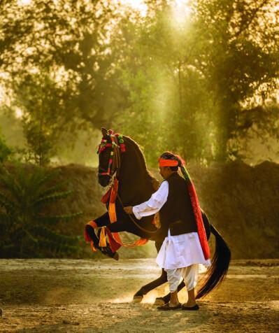 Marwari, The Horse of India