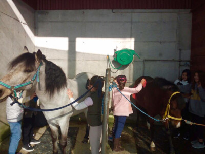 Actividades no Pony Club do Porto