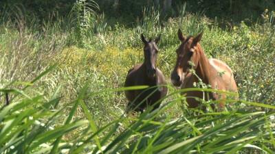 Cavalo Lusitano - Uma Selecção Ímpar