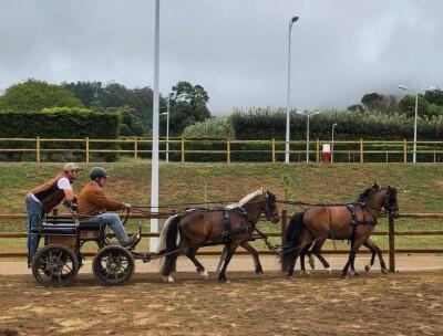 Estágio de Atrelagem nos Açores
