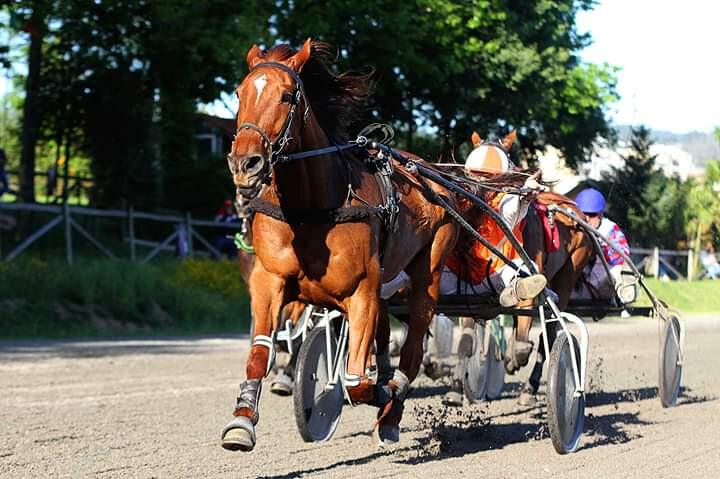 Equitação - Foto cedida Julio Ornelas