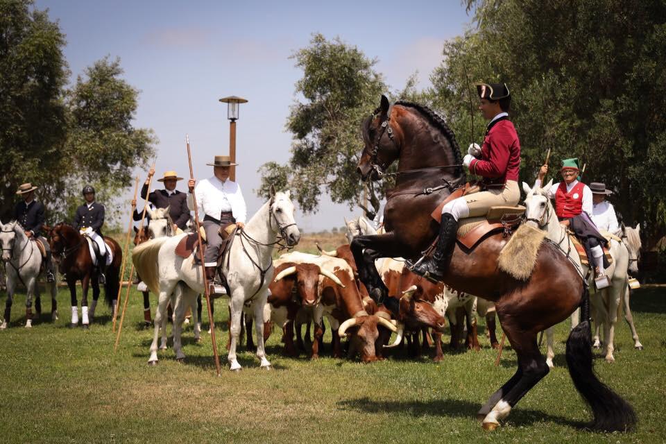 Samora Equestre Foto Equestrez