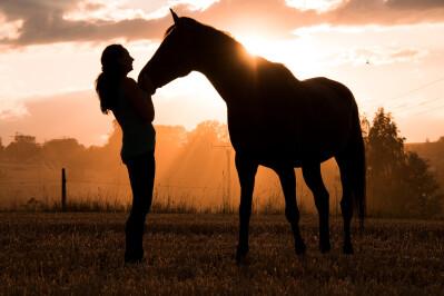 Da Equitação Natural para a Equitação em Harmonia