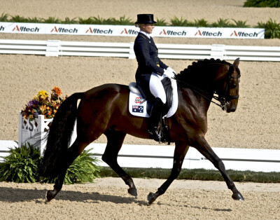 Equitação: o desporto que não distingue género