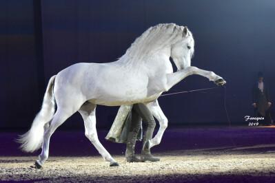 A Feira do Cavalo em Avignon
