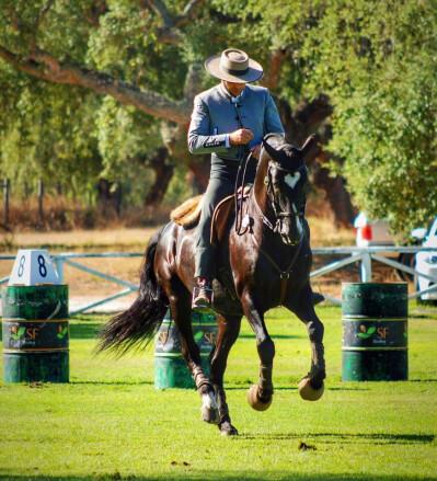 Equitação de Trabalho a caminho de Beja