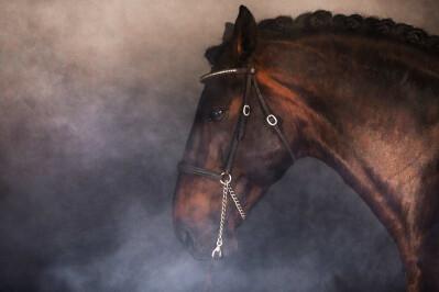 Alter International Horse Summit adiado para o último trimestre do ano