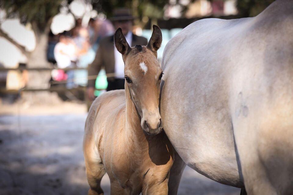 Samora Equestre