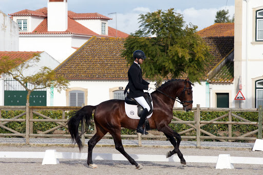 Projeto cavalos jovens ensino apsl