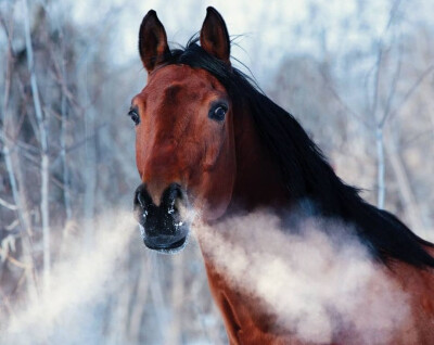 Como melhorar o potencial aéreo e a capacidade respiratória do cavalo?