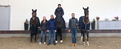 Portuguese Sport Horse na Dinamarca