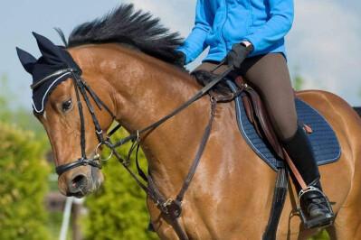 Manifestações de lateralidade nos cavalos (3.ª parte)