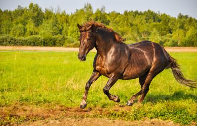 Cérebro, percepção e comportamento do Cavalo