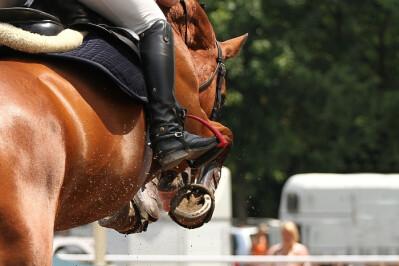 Dupla jornada equestre na Equireguengos