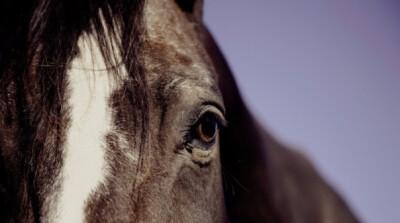 Petição quer acabar com maus-tratos aos cavalos