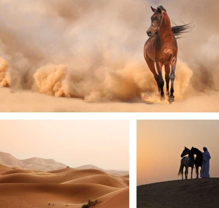 Hissan Arabi-memory